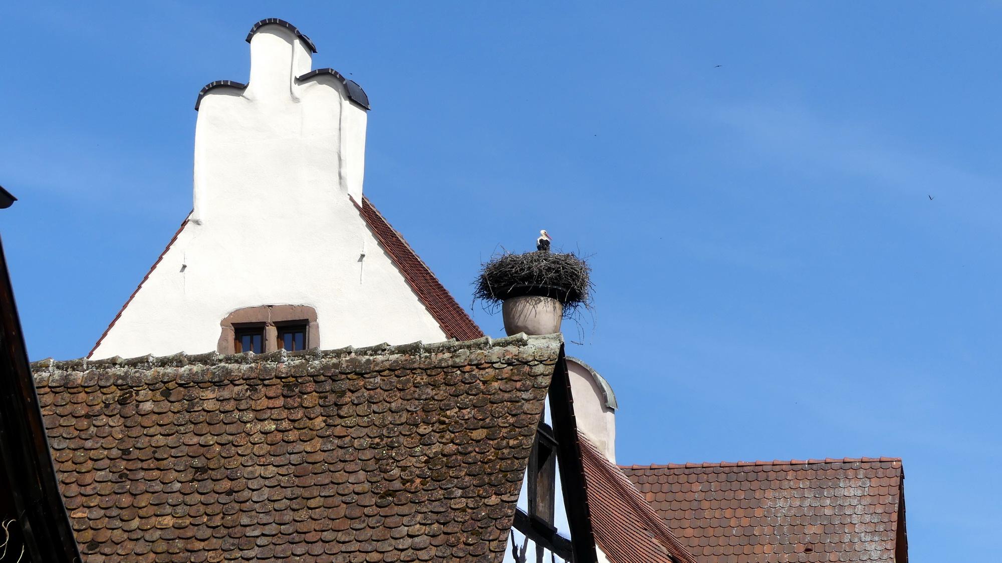 Les P46 en Alsace pour leur 55ème anniversaire 36